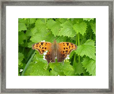 Framed Print featuring the photograph Mystique by Lingfai Leung