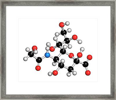 N-glycolylneuraminic Acid Molecule Framed Print