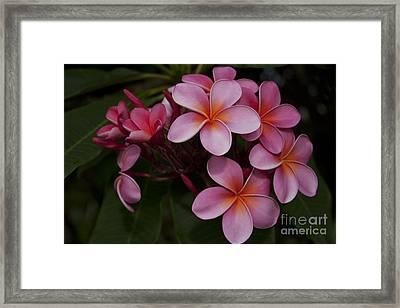 Na Lei Pua Melia O Wailua - Pink Tropical Plumeria Hawaii Framed Print by Sharon Mau