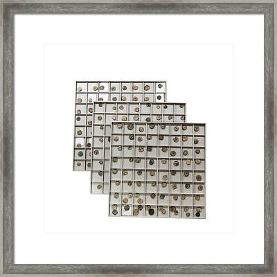 Nabatean Bronze Coins Framed Print by Science Photo Library