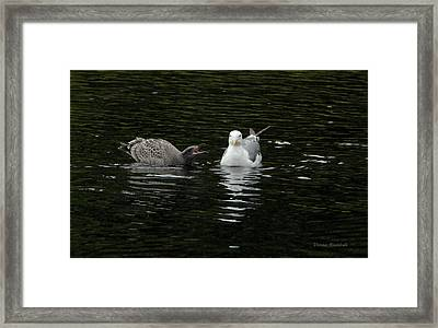Nag Nag Nag Framed Print by Donna Blackhall