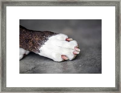 Nail Biter Framed Print