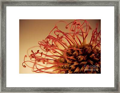 Framed Print featuring the photograph Nairobi Touch by Bobby Villapando