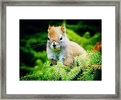 Framed Print featuring the photograph Naive by Zinvolle Art