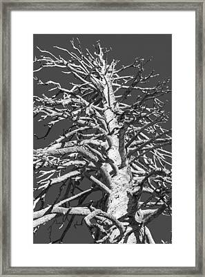 Naked And Barren Framed Print