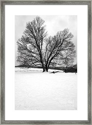 Naked And Starving As They Are Framed Print by Olivier Le Queinec