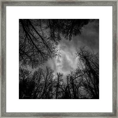 Naked Branches Framed Print by Bob Orsillo