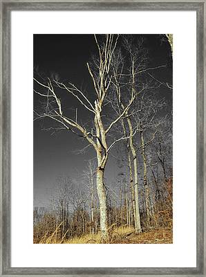 Naked Branches Framed Print by Linda Segerson