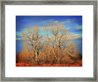 Naked Branches Framed Print by Marty Koch