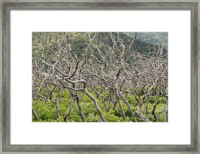 Framed Print featuring the photograph Naked Ladies Dancing by Mary Carol Story