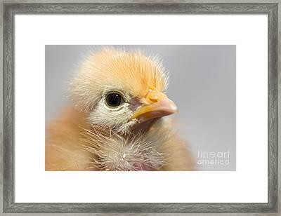 Naked Neck Chick Framed Print