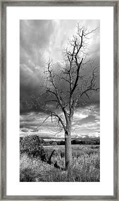 Naked Tree Framed Print by Roger Swieringa