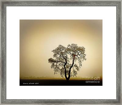 Naked Trees 4 Framed Print by Artist and Photographer Laura Wrede