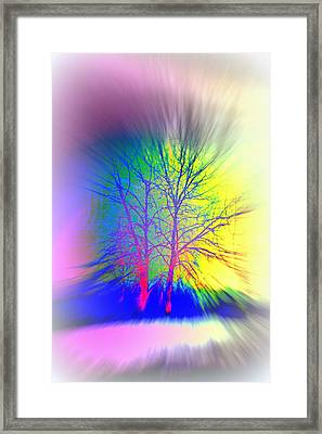 Naked Trees Can Also Be Colorful  Framed Print