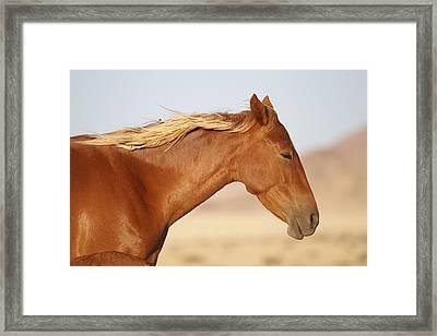 Namib Desert Mare Framed Print by Vincent Grafhorst