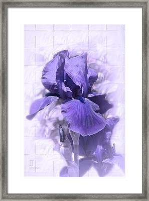 Nancy Framed Print by Elaine Teague