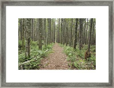 Nancy Pond Trail - White Mountains New Hampshire  Framed Print by Erin Paul Donovan