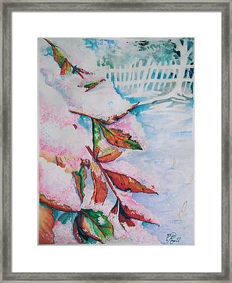 Nandina In Snow Framed Print