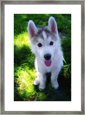 Nanook Of The North Framed Print by Bill Cannon