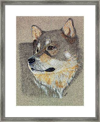 Framed Print featuring the drawing Nanook by Stephanie Grant