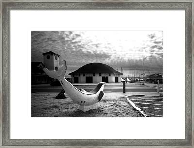 Nantasket Dolphin Framed Print by David DeCenzo