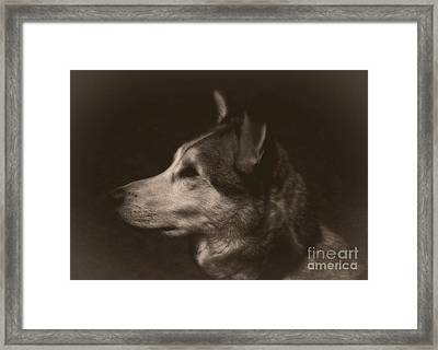 Framed Print featuring the photograph Nanuk Of The North by Marjorie Imbeau