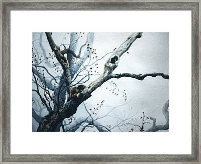 Nap In The Mist Framed Print