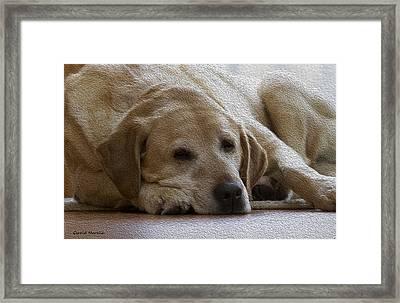 Nap Time 2 Framed Print
