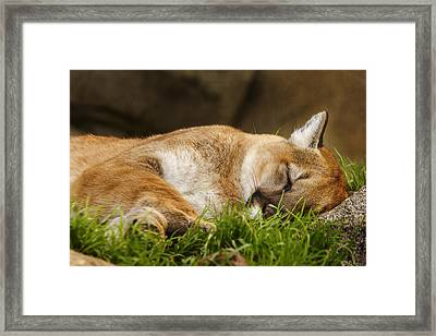 Framed Print featuring the photograph Nap Time  by Brian Cross