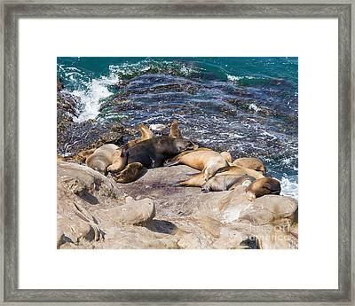 Nap Time Framed Print by Dale Nelson