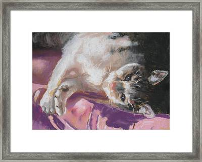 Nap Time For Kitty Framed Print by Janice Harris