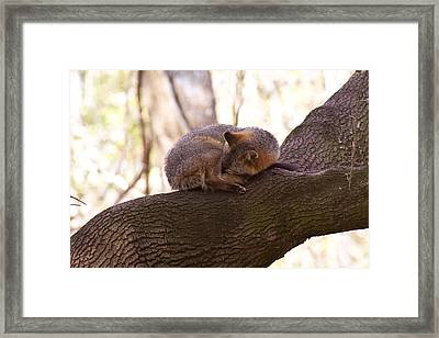 Nap Time Framed Print by Jessica Brown