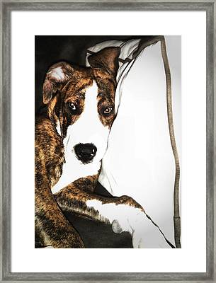 Framed Print featuring the photograph Nap Time by Robert McCubbin