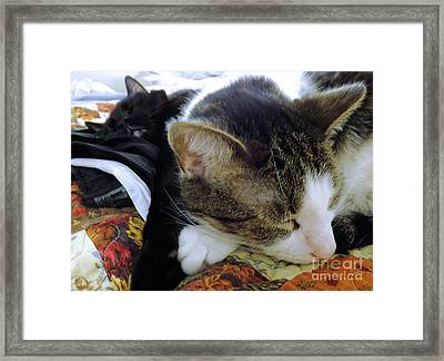 Nap Time Framed Print