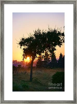 Framed Print featuring the photograph Napa Moment by Ellen Cotton
