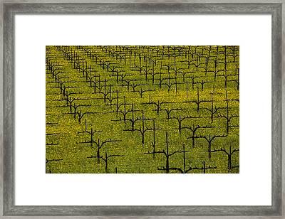 Napa Mustard Grass Framed Print by Garry Gay