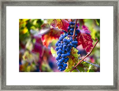 Bounty Of Napa Valley II Framed Print by George Oze