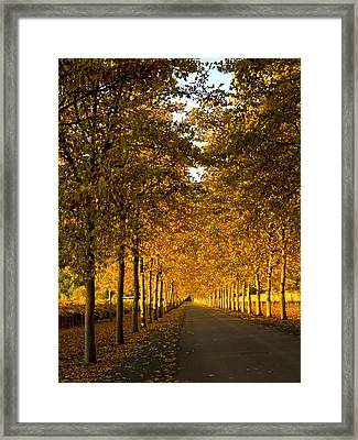 Napa Valley Fall Framed Print by Bill Gallagher