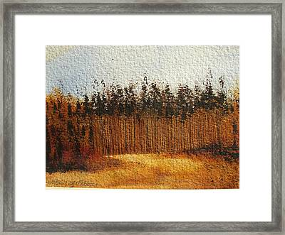 Napa Valley Fall Forest Framed Print by Rebecca Lou Mudd