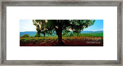 Napa Valley Winery Roadside Framed Print