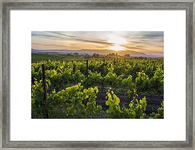 Napa Valley Sunset  Framed Print