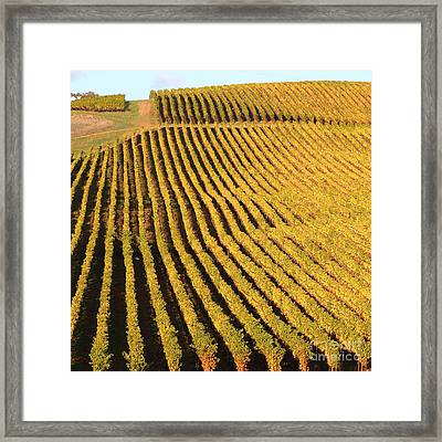 Napa Valley Vineyard 7d9062 Square Framed Print by Wingsdomain Art and Photography