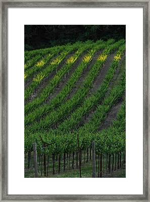 Napa Valley Vineyard Framed Print by Steve Gadomski