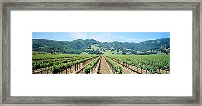 Napa Valley Vineyards Hopland, Ca Framed Print by Panoramic Images