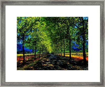 Napa Vineyard 2 Framed Print by Cary Shapiro