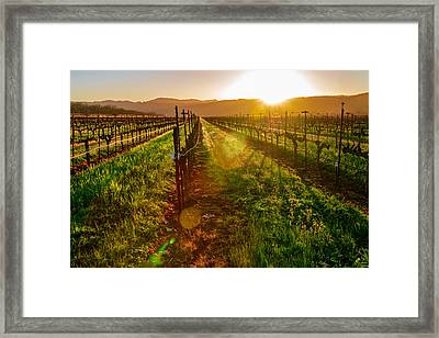 Napa Vineyard Framed Print by Francesco Emanuele Carucci