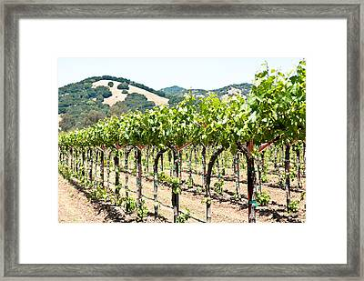 Napa Vineyard Grapes Framed Print
