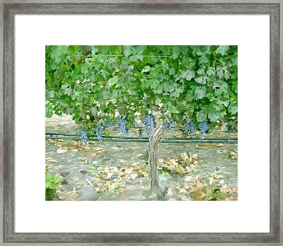 Napa Vineyard Framed Print by Paul Tagliamonte