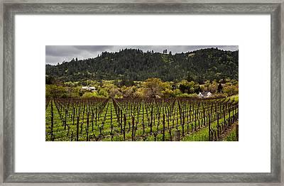 Napa Vineyard Spring Framed Print by John Crowe