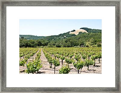 Napa Vineyard With Hills Framed Print